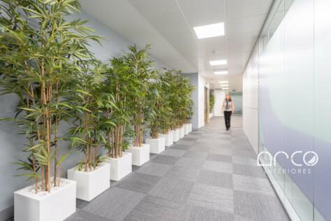 pasillo plantas